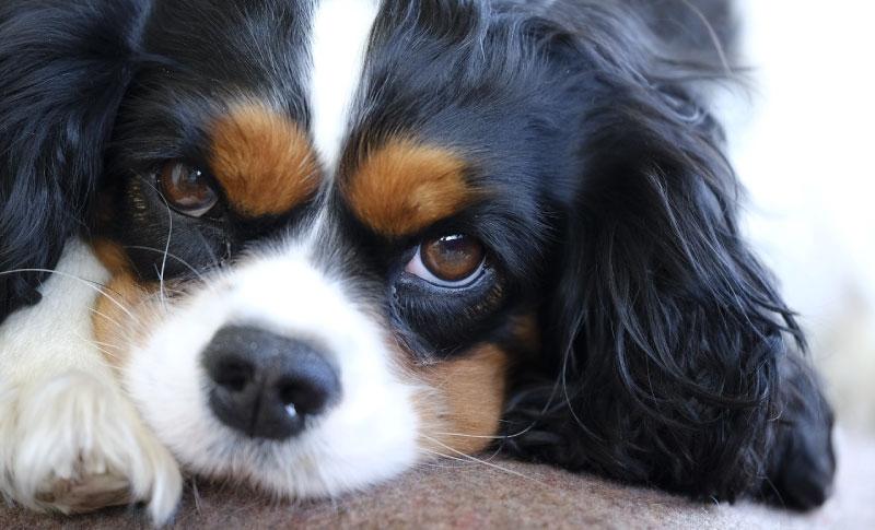 Eine DNA-Analyse für Haustiere