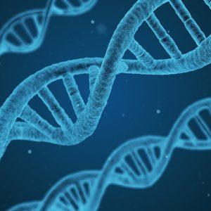 DNA Analysen